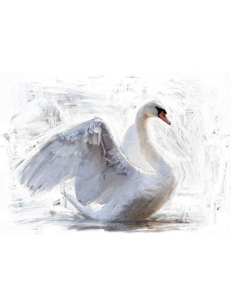 White Swan Reversed